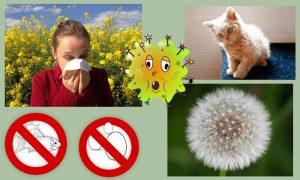 allergies, personal, pollen, manage, managing, cat, fish, eggs,